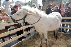 Vrouwelijke ezel in Pasen-decoratie in Moskou Stock Fotografie