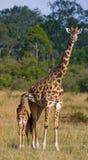 Vrouwelijke giraf met een baby in de savanne kenia tanzania 5 maart 2009 Royalty-vrije Stock Fotografie