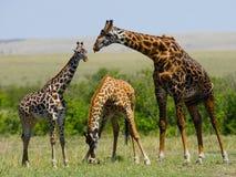 Vrouwelijke giraf met een baby in de savanne kenia tanzania 5 maart 2009 Stock Foto