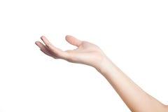 Vrouwelijke hand Royalty-vrije Stock Afbeeldingen