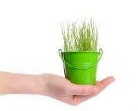 Vrouwelijke hand die een emmer gras houden Royalty-vrije Stock Afbeelding