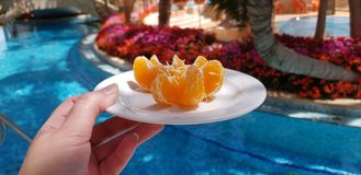 Vrouwelijke hand die kleine witte plaat met gepelde mandarin plakken houden stock afbeelding
