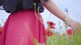 Vrouwelijke hand die papaversgebied doornemen De hand van het meisje wat betreft rode papaver bloeit close-up Het Concept van de  stock video