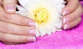 Vrouwelijke hand en bloem Royalty-vrije Stock Foto's