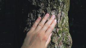 Vrouwelijke hand het strijken geweven boomboomstam stock video