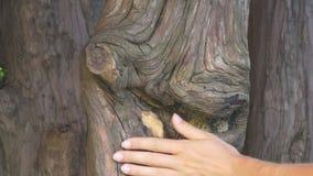 Vrouwelijke hand wat betreft ongebruikelijke boomboomstam stock videobeelden