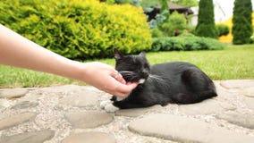 Vrouwelijke handclose-up die dakloze kat petting die die op rotsen rusten stock videobeelden