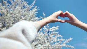 Vrouwelijke handen die de liefde van het gebaarhart tonen door sakuraboom en hemel van de handen witte bloesem in achtergrondpov  stock footage