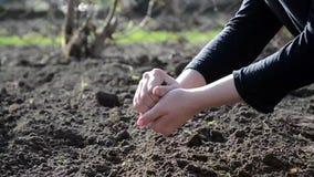Vrouwelijke handen die in het land werken stock video