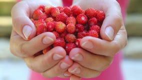 Vrouwelijke handen met aardbeienclose-up stock video