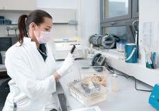 Vrouwelijke het laboratoriummuis van wetenschappershandvatten Stock Afbeelding