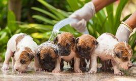 Vrouwelijke het puppyhond van de handwas stock afbeeldingen