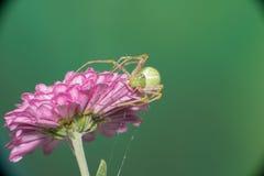 Vrouwelijke het springen spin Royalty-vrije Stock Afbeeldingen