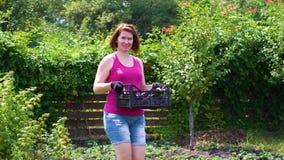 Vrouwelijke landbouwer die camera en dragende plastic doos met aubergines bekijken stock videobeelden