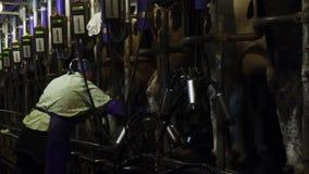 Vrouwelijke landbouwer die in de schuur werken stock footage