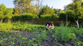 Vrouwelijke landbouwer het plukken aardbeien in de binnenplaatszitting op haar hunkers stock video