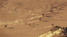 Vrouwelijke leeuw in Afrikaanse bushveld, Namib-woestijn, Namibië Mening van hierboven royalty-vrije stock afbeelding