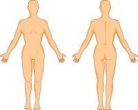 Vrouwelijke menselijke anatomie Stock Foto's