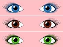 Vrouwelijke ooginzameling Stock Afbeeldingen