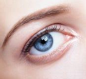 Vrouwelijke oogstreek en brows met dagmake-up Stock Foto