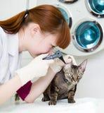 Vrouwelijke professionele dierenarts arts die het oor van een kat met een oorspiegel onderzoeken Royalty-vrije Stock Fotografie