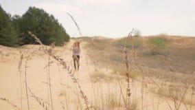Vrouwelijke reiziger in de woestijn stock footage