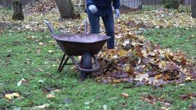 Vrouwelijke roestige de karkruiwagen van de tuinmanlading met droge bladeren in de herfstbinnenplaats 4K stock video