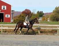 Vrouwelijke Ruiter op Bruin Paard in de herfst Royalty-vrije Stock Afbeeldingen