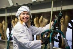 Vrouwelijke technicus die met melkende machines in koeienschuur werken royalty-vrije stock foto's