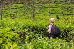 Vrouwelijke toerist die van mooie aard van theeaanplantingen genieten, Sri Lanka royalty-vrije stock foto's