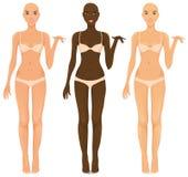 Vrouwelijke torsos Royalty-vrije Stock Afbeelding