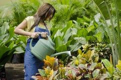 Vrouwelijke tuinman die de installaties water geven royalty-vrije stock fotografie