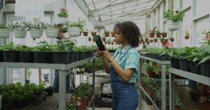 Vrouwelijke tuinman die foto's in serre nemen stock footage