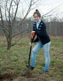 Vrouwelijke tuinman die framboos planten royalty-vrije stock afbeelding