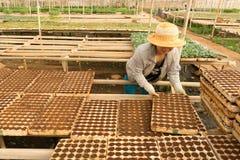 Vrouwelijke tuinman die in tuin werken Stock Foto
