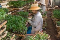 Vrouwelijke tuinman die in tuin werken Stock Foto's
