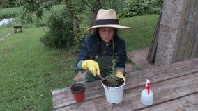 Vrouwelijke tuinman met potten dichtbij lijst stock videobeelden