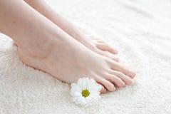 Vrouwelijke voeten met madeliefje Stock Foto's