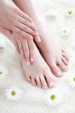 Vrouwelijke voeten met margrieten. Stock Foto