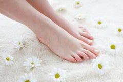Vrouwelijke voeten met margrieten. Stock Afbeelding