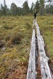 Vrouwelijke Wandelaar in de wildernis van Noorwegen Stock Afbeelding