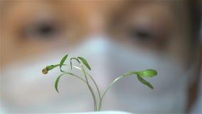 Vrouwelijke wetenschapper die een kleine spruit in het laboratorium bekijken Langzame Motie stock videobeelden