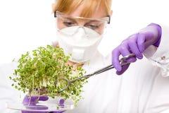 Vrouwelijke wetenschapper die installatiesteekproef bekijkt Royalty-vrije Stock Foto