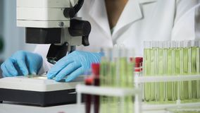 Vrouwelijke wetenschapper het bekijken bacteriënsteekproef op microscoop, biochemisch onderzoek stock afbeelding