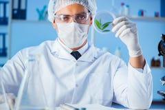 Vrouwelijke wetenschapperonderzoeker die een experiment in een labora leiden royalty-vrije stock afbeelding