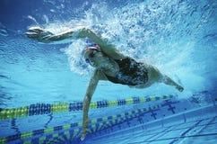 Vrouwelijke Zwemmer Swimming In Pool Stock Afbeelding
