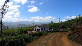 Vrouwen die brandhout op een theeaanplanting dragen stock footage