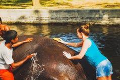 Vrouwen die een olifant wassen Stock Foto's