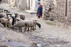 Vrouwen die met hun schapen in de schuur zijn Stock Afbeelding