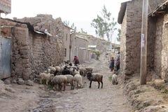 Vrouwen die met hun schapen in de schuur zijn Stock Fotografie